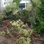 place de parking envahi de vegetations
