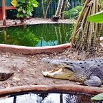 The croc family