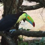 Crazy Toucans in Nature preserve.