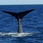Photo of Whale Watch