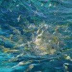 Spirit Snorkeling Foto