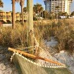 Nice hammock on the beach