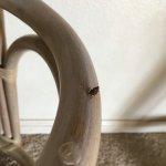 Screws exposed from stool
