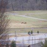 View of horses and Antler Hill Village parking