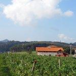 Foto de los viñedos de Merrutxu