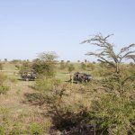 Photo of Kicheche Bush Camp
