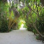 維利多島度假村照片