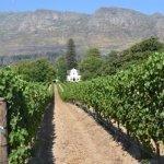 The Cape Wine Tour of Historic Constantia & Beautiful Stellenbosch.