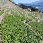 Photo of Yusumizugaura Terrace Field
