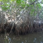 The Waterside Bentota Foto