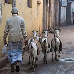Fresh Milk in the morning - street life on a Calcutta street