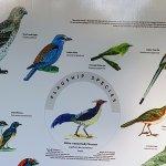 Birds of Margalla Hills National Park