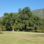 A huge Banayan Tree in the foot hills of Margalla Hills National Park