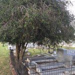 Key West Cemetery - a tree lover or did this person like the shade?