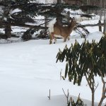 Deer going right past our patio doors.