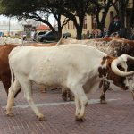 Photo de Fort Worth Stockyards National Historic District