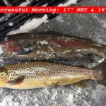 Two Very Nice Winter Trout