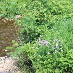 The river with flowers