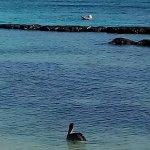 Photo of Omni Beach