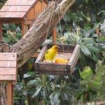 Birdfeeder on grounds