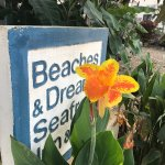 Beaches And Dreams Foto