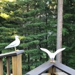 Foto de Eagles Nest Inn Bed and Breakfast