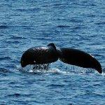 Whale season!