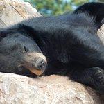 Foto de Bear Country USA