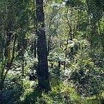 Warranwood Reserve