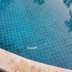 Pattawia Resort & Spa Hua Hin Foto