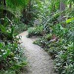 Photo de Carambola Botanical Gardens & Trails