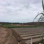 Photo of Tanaka Farms LLC