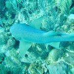 Foto de White Sands Dive Shop