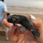 Turtle release!