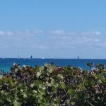 Sailboats out on the water.
