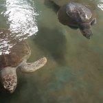 Zwei ältere Schildkröten