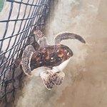 Leider ist diese Schildkröte behindert