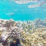 Karafuu Beach Resort and Spa Foto