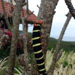 Cterpillar in the bush