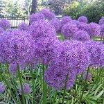 Photo of Edwards Gardens