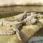 Photo of La Planete des Crocodiles
