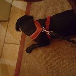 Dog friendly :-)