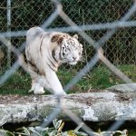 Photo of Zoo d'asson