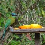 Bird feeding platform near the rooms.