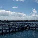 Dolphins Enclosure