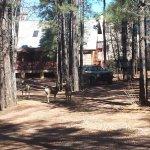 Visiting deer
