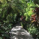 Fotos del compeljp Pachira, sin duda lo mejor de nuestras vacaciones en Costa Rica, fue tortugue