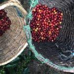 Foto de Andes EcoTours