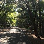 Road through the Shipyard Plantation towards the Sonesta