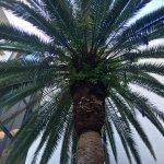 Large palms outside near pool